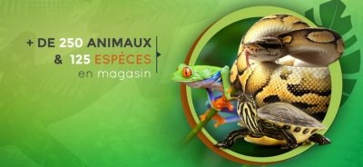 Magazoo The Universe Of Reptiles