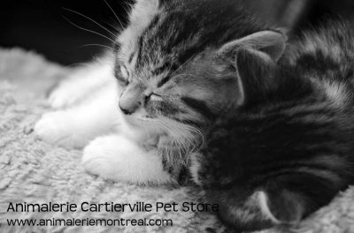 Animalerie Cartierville Pet Store