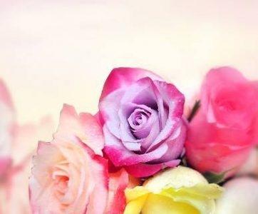 Fleuriste pour Vous inc
