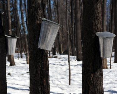 Top 10 maple sugar shacks